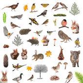 Animales y aves — Foto de Stock