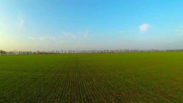 Moviéndose a través de campo verde. — Vídeo de stock