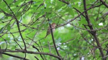 Single bird on branch — Stock Video