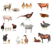 Livestock set — Stock Photo