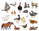Domestic animals and birds — Stock Photo