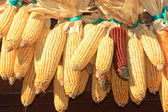 Maïs voorraad — Stockfoto