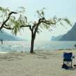 Stock Photo: Chairs, trees, and surfers