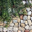 Ivy against stone wall — Stock Photo