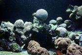 Ocean flora — Stock Photo