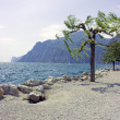 Tree on rocky beach — Stock Photo