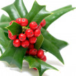 Sprig of ilex — Stock Photo