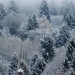 Fir-tree landscape panorama — Stock Photo #35400379
