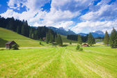 Val di fiemme plateau — Stock Photo