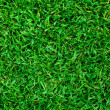 Photo: Green grass texture