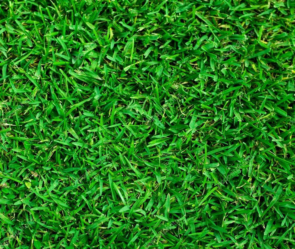 Green grass texture — Stock Photo © smilingsunray #13859876
