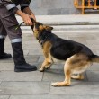 Police dog — Stock Photo #13815802