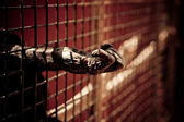 Mão de macaco — Foto Stock