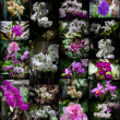 Orchids collage — Foto de Stock