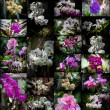 Orchids collage - Stock Photo