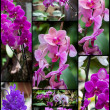 Orchids collage — Stock Photo