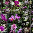 Orchids collage - Lizenzfreies Foto