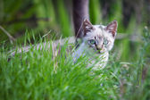 Katze mit blauen augen — Stockfoto