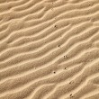 Stock Photo: Sand footprints