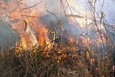 Large grass fire — Stock Photo