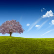 Stock Photo: White Tree on Green Land.
