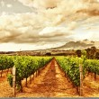 Grape valley — Stock Photo #12529771
