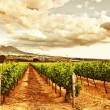 Beautiful vineyard - Stock Photo