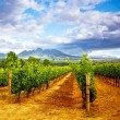 Grape valley — Stock Photo #12692814
