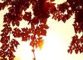 Rote blätter-grenze — Stockfoto