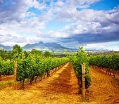 Dolina winogron — Zdjęcie stockowe