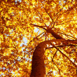 Autumn tree background - Foto Stock