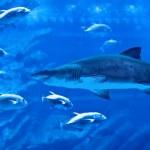 Постер, плакат: Big natural aquarium