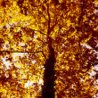 Autumn tree background — Stock Photo