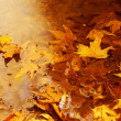 Floating autumn leaves - Stock Photo