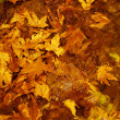 Autumn leaves background — Stock Photo #13684333