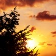 Silhouette of tree over sunset — Stock Photo