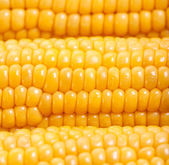Sweetcorn background — Stock Photo