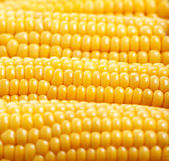 Yellow corn background — Stock Photo