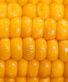 Closeup maize background — Stock Photo