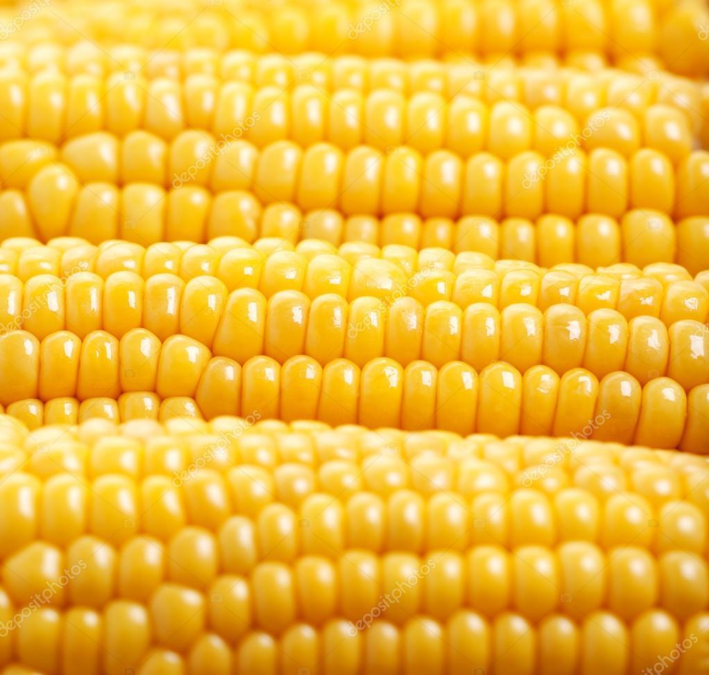 Sweet Corn Wallpaper Photo of Yellow Corn
