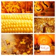 Autumn season collage — Stock Photo