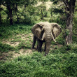 Stock Photo: Elephant in fresh woods