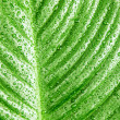 Green leaf background — Stock Photo #15061427