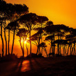 Beautiful trees on sunset — ストック写真