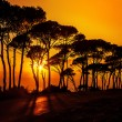 Beautiful trees on sunset — Stock Photo #15063505