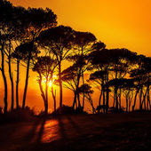 Beautiful trees on sunset — Stock Photo