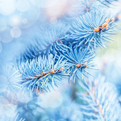 Frozen fir tree background — Stock Photo