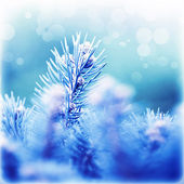 Coniferous branches covered rime — Stock Photo