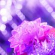 Purple gift bow — Stock Photo