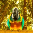 Macaw parrot — Stock Photo